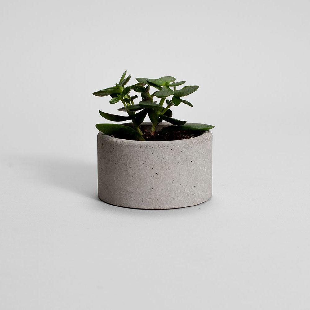 Zdjęcie produktu PARVI GRAY CONCRETE PLANT - doniczka