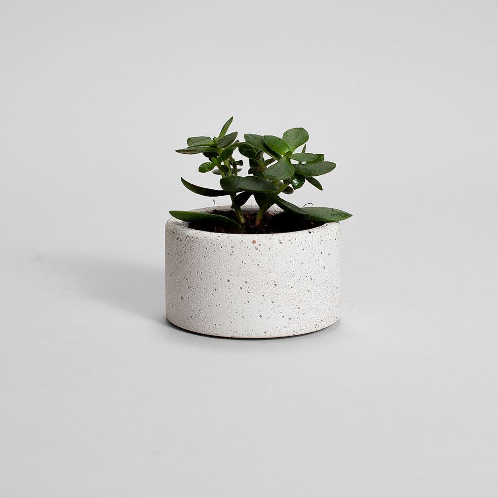 Zdjęcie produktu PARVI STRACIATELLA CONCRETE PLANT  - doniczka
